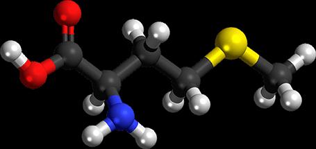 Метионин уникальная протеиногенная аминокислота которая содержит серу и может являться предшественником другой серосодержащей аминокислоты - цистина
